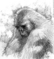 tnt_primatas_gorila1